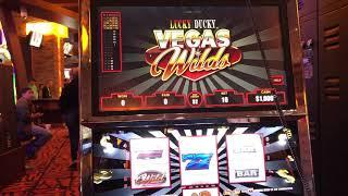 Lucky Ducky Vegas Wilds VGT Slots Red Screen Wins  Choctaw Casino, Durant, OK.