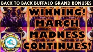 Buffalo Grand Slot Machine - Back to Back Bonuses! WINNING!!