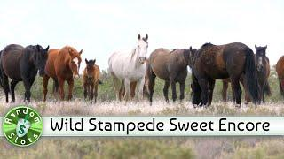 Wild Stampede slot machine, Encore of a Sweet Spin