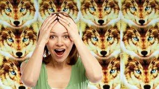 WOLVES For DAYS and a HUGE WIN on Konami * Golden Wolves | Casino Countess