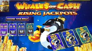 NEW WHALE$ OF CA$H !!SUPER FUN !! WHALES OF CASH RISING JACKPOTS Slot (Aristocrat) $2.64 Bet 彡栗スロ