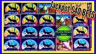 $40 BETS/ COYOTE MOON SLOT MACHINE/ HIGH LIMIT/ JACKPOT/ GRANDE WIN!!