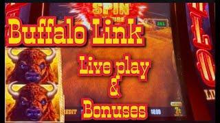 Buffalo Link - first Live Play & bonuses