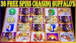 CHASING THE BUFFALO HEADS 36 Free Spins   BUFFALO GOLD COIN SHOW   Slot Machine Pokies