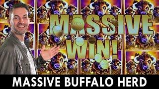 MASSIVE Buffalo Herd   Seven Feathers Casino in Oregon! #ad