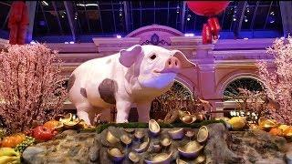 I WANNA BE A PIG! YEAR OF THE PIG!