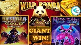 Buffalo Gold Slot Machine - Big Bet, BIG WIN! w/ Panda Gold & Miss Kitty Gold