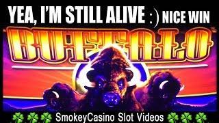 BUFFALOOOOO! Deluxe Slot Machine Nice Win - Aristocrat Slot