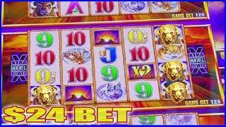 BUFFALO GOLD SLOT MACHINE • $24 BET HIGH LIMIT BONUS